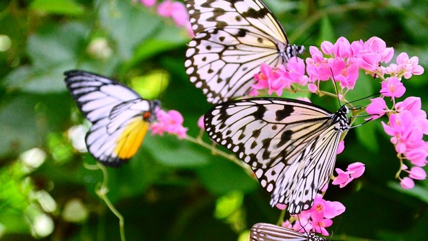 Пенанг ферма бабочек