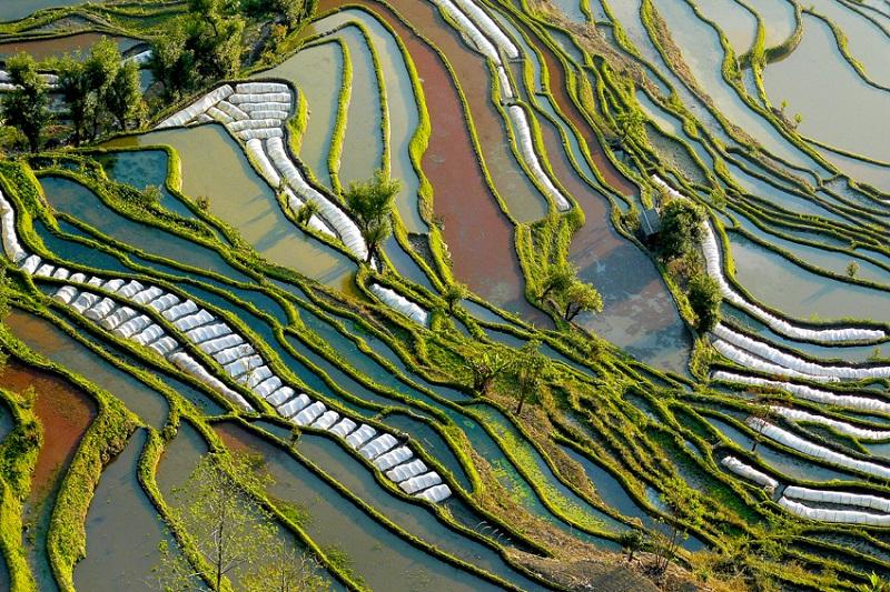 Рисовые поля Хунхэ Хани